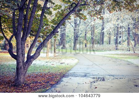 First snow scene in park. Autumn season