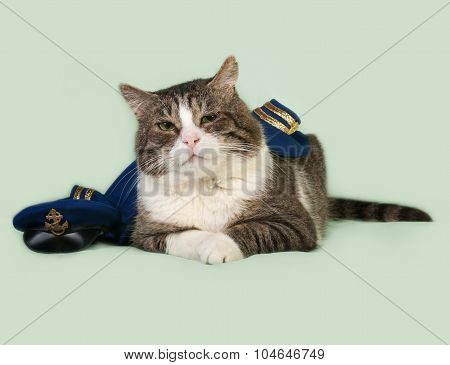 Old Striped And White Cat In Naval Uniform With Cap Lying On Green