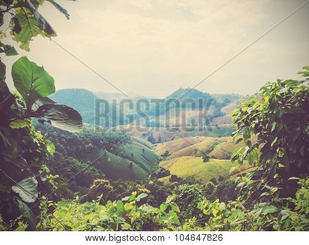 Creeper Plant And Mountain Background