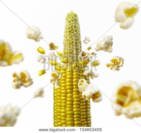 corncob explodes and produces popcorn healthy vegetarian food