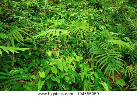 Ferns leaves and other tropical plants create beautiful natural texture background
