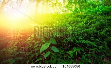Warm yellow sunlight shines through leaves and tree branches inside in tropical forest. Beautiful green nature background
