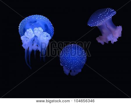 illustration with blue jellyfishes isolated on black background