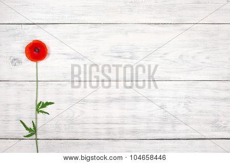 Red Poppy On Old White Wooden Table