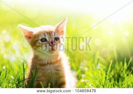 Art  Little Ginger Cat Kitten Outdoors