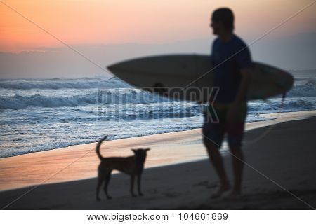 Dog And Surfer