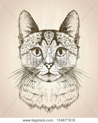 Hand drawn graphic sketch illustration of a cat face, front view.