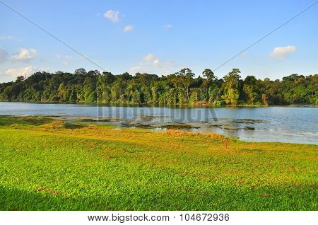 Macritchie Reservoir with trees and grass field