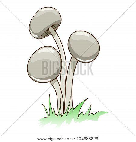 Toxic mushrooms vector illustration