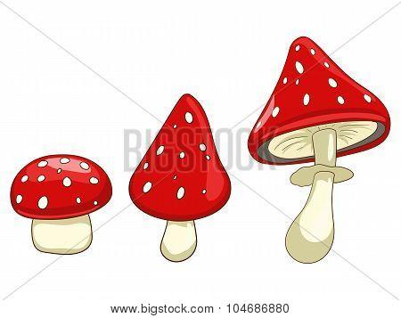 Amanita toxic mushroom vector illustration