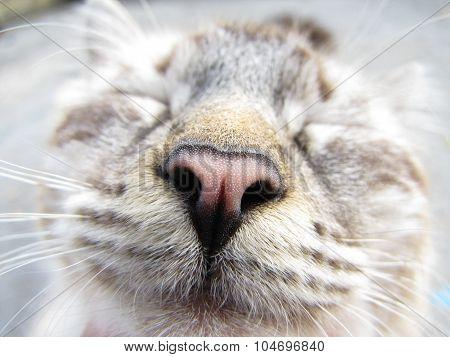 Beautiful macro cat's nose