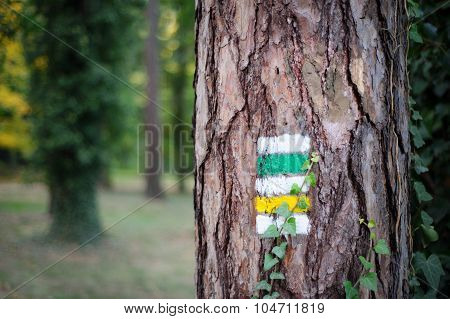 Tourist Trail With Yellow Sign And Green Sign On The Tree