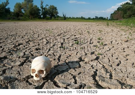 Human Skull On The Soil Of Dried Out Lake During Summer Drought