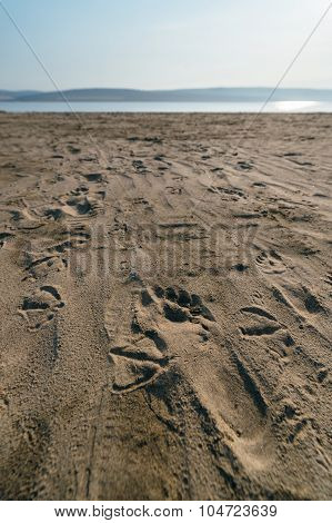 Gulls And Human Traces On Sand