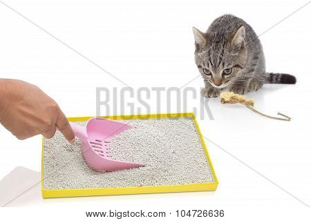 A Hand Filtering Artificial Sand In Tray And Cat Gazing