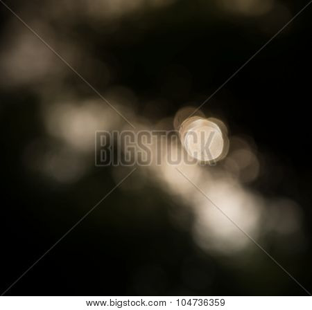 Blur Defocused  Bokeh Of Dark In Bamboo Forest Abstract Background