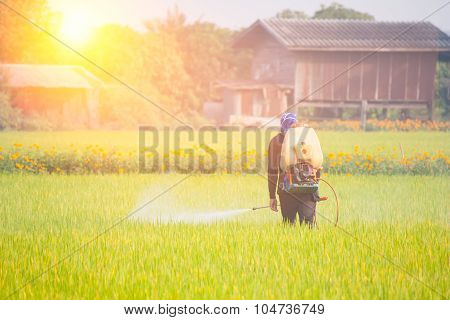 Farmer Spraying Pesticide In The Rice Field With Sunrise In The Morning