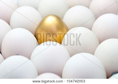 Golden Eggs Among The White Eggs