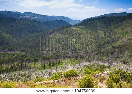 Wild Mountain Landscape. South Of Corsica Island