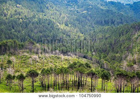 Wild Mountain Forest Landscape. South Of Corsica