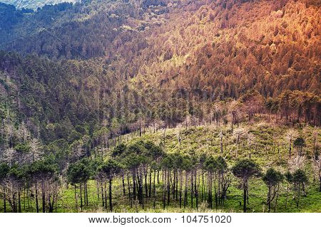 Wild Mountain Forest Landscape. Corsica