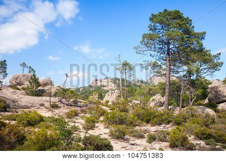 Wild Mountain Landscape With Pine Trees