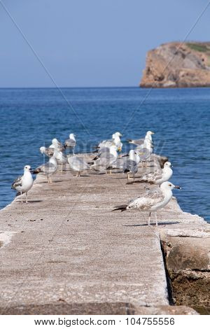 Some Seagulls On Concrete Dock On The Sea.