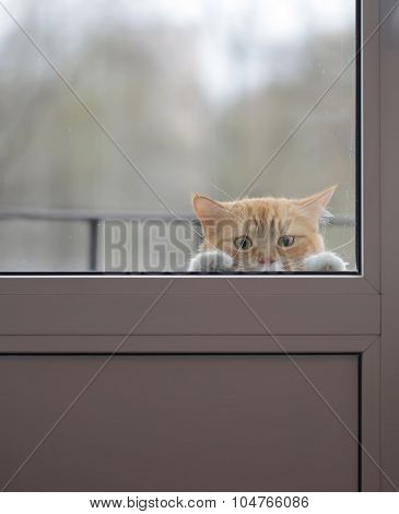 Red cat with a sad eyes outside the glass door
