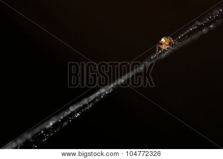 Silhouette of spider on a web closeup