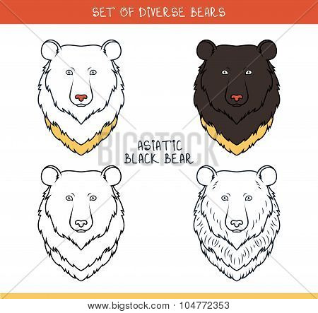 Asiatic black bear. Set isolated face, heads bear in color