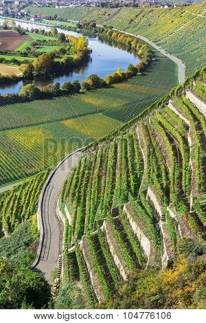 Vineyards at the Neckar