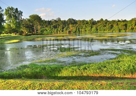 Macritchie Reservoir with plants on the water