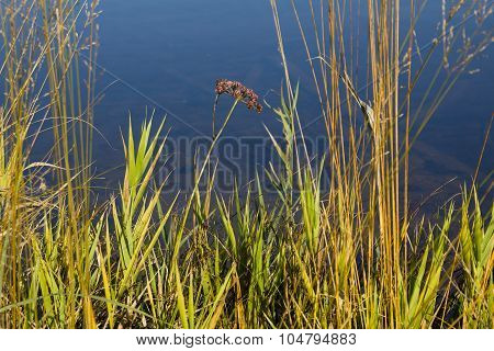 Plants At The Lake Shore