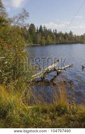 Idyllic Moor Lake Kirchsee
