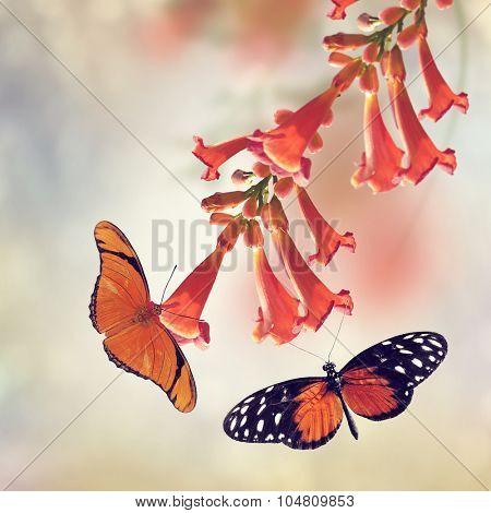 Trumpet Vine Bloom and Butterflies