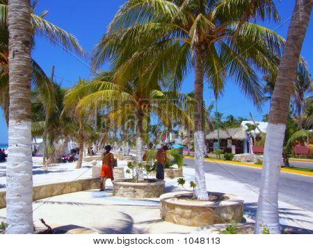 Street Palms In Pots