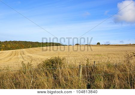 Harvest Time In Autumn