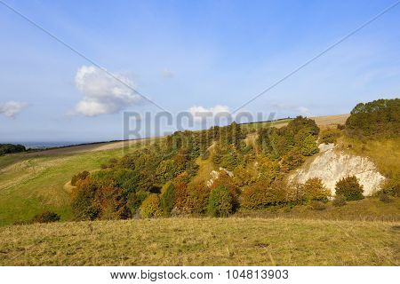 Autumnal Hillside Trees