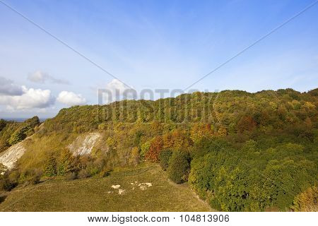 Wooded Hillside In Autumn