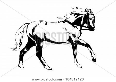 Horse Gallop In Black And White.
