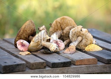 Edible mushrooms on a wooden table