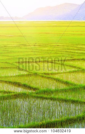 Green paddy fields in Nepal, Annapurna trekking