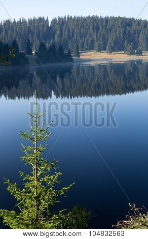 Emerald green fir on the background of blue surface of forest lake pine forest and its reflection in the water early in the sunny morning in the Rhodope Mountains (Rhodopes Bulgaria)