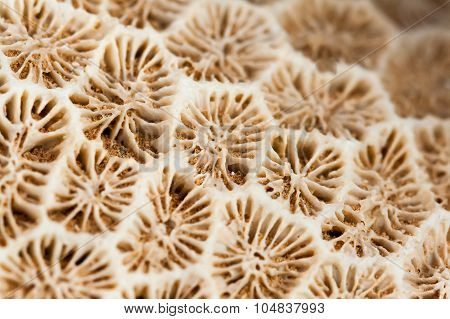 Close-up of coral found at Dihamri, Socotra, Yemen.