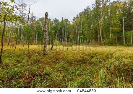 Colorful Landscape With Wetlands And Dead Trees