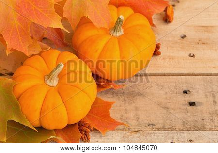 Mini Pumpkins And Fall Leaves