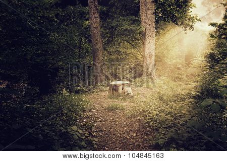Tree Trunk At Scary Shiny Forest With Light Ray Of Bright Moon