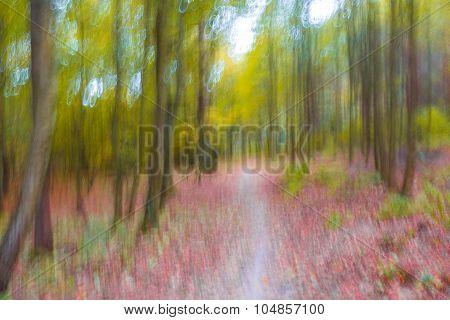 Dreamy Abstraction Of Autumnal Forest