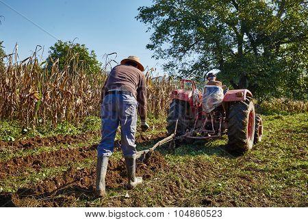 Potatoes Harvest