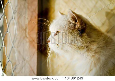 Cat In Cage